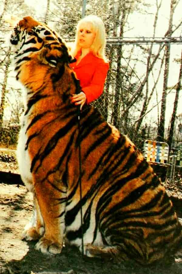 Biggest Tiger ever Recorded