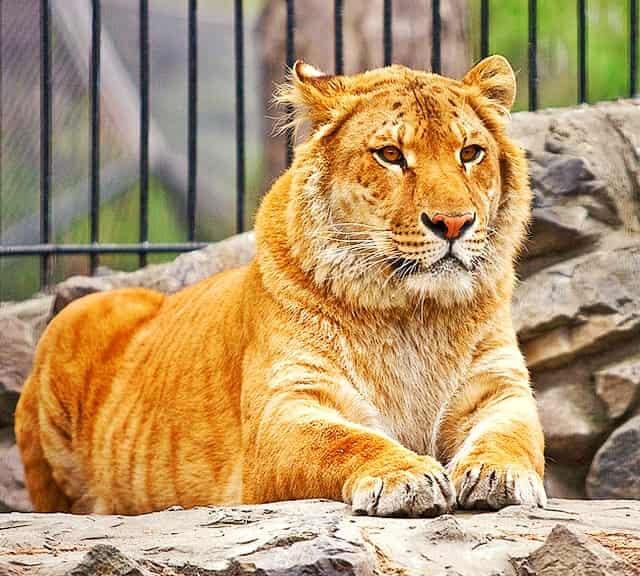 Bildresultat för liger