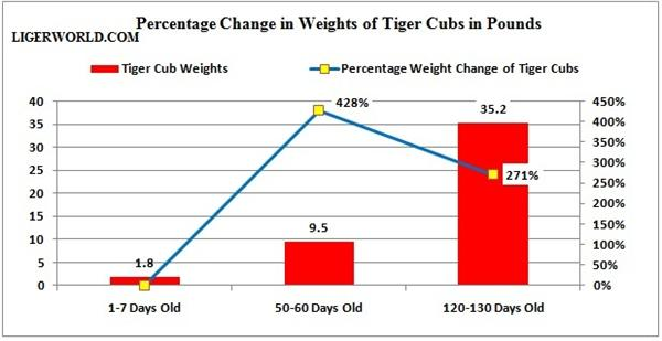 Percentage weigh increase in liger cubs