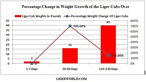 Liger Graph Indicating Percentage Increase within Liger Growth.