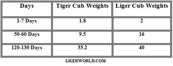 Liger and Tiger Cubs Weights.