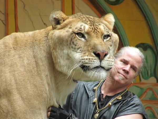 Liger Hercules with its Master Dr. Bhagavan Antle.