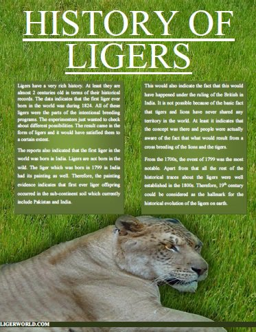 Ligers History
