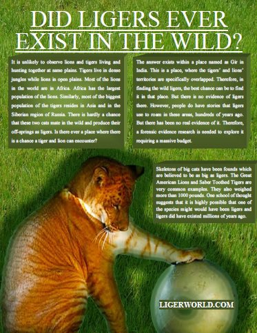 Liger Magazine explores ligers in the wild.