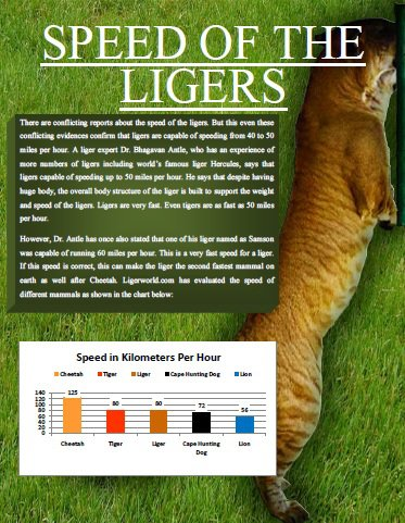 Liger Magazine explores Speed of the Ligers.