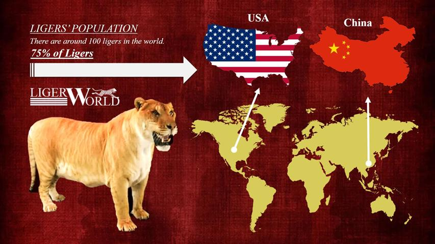 Population of the ligers in United States and China.