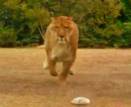 Average Speed of a liger is around 50 to 60 miles per hour.