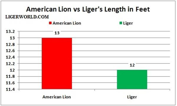 Liger vs. Great American Lion - Length Comparison.
