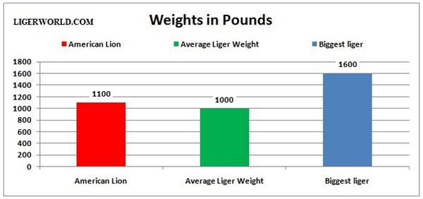 Liger vs Great American Lion - A weight Comparison.
