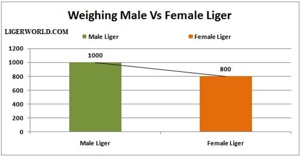 Liger Male Female Weights.