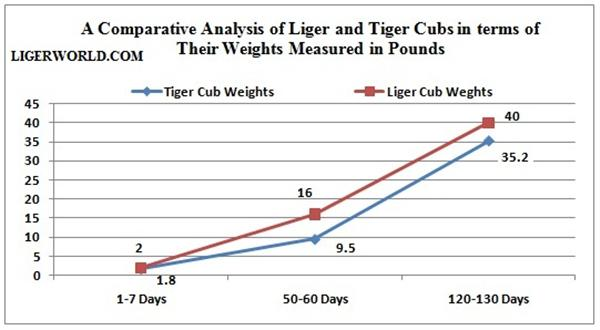 Liger & Tiger Cubs Comprehensive Weight. Weight Comparison. Growth Comparison.