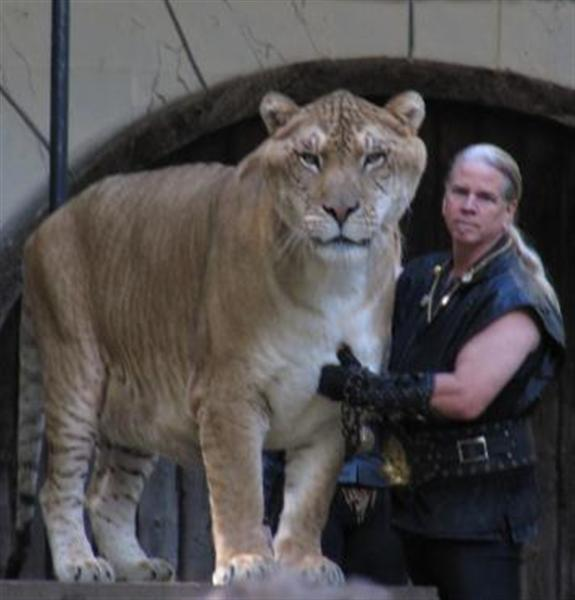Liger Hercules Never had Blindness or Eyesight Problems.