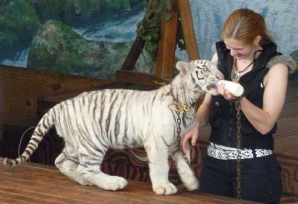 Tiger Cubs - Growth Rate