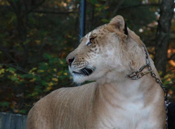 gute zoos in deutschland