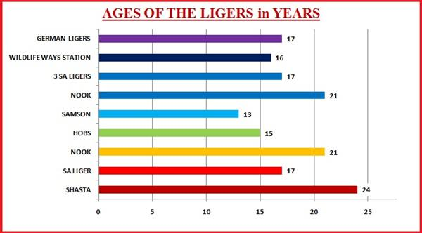Liger Average Ages. All Ligers lifespan was normal.