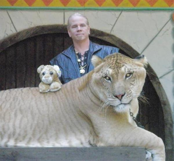 Liger weighs more than 1600 Pounds.