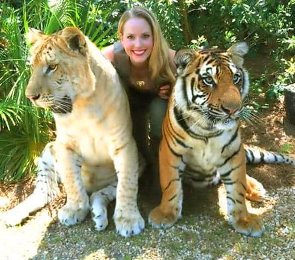 Liger population is around 100 globally while there are 3000 tigers in the wild.