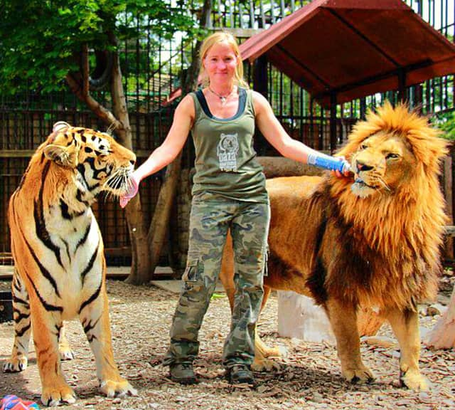 compare and contrast essay on lions and tigers Get an answer for 'how can i compare and contrast themes from two different stories' and find homework help for other literature questions at enotes  usually a comparison/contrast essay will.